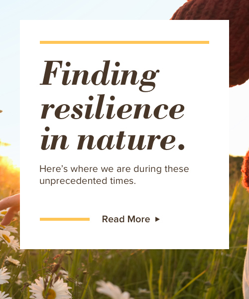 Finding resilience in nature. Here's where we are in these unprecedented times.