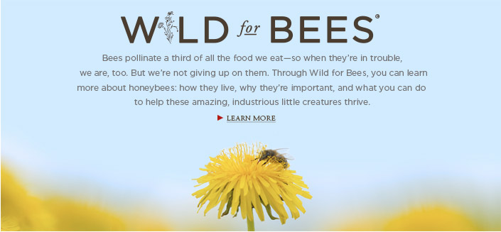 Wild For Bees
